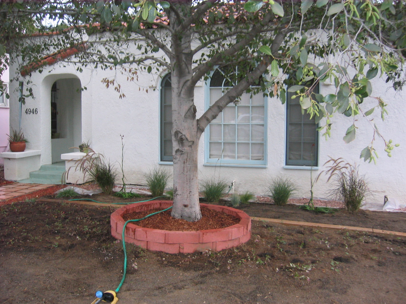 This. Frugal  drought tolerant landscaping   Angela Barton